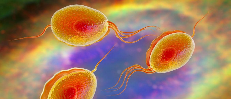 Инкубационный период и симптомы ЗППП